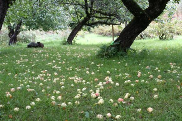 omena-ahdistus
